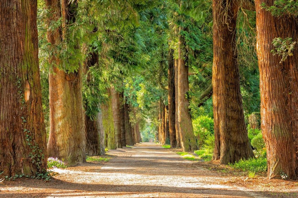 2021-03-29 BALANS Schriftelijke vragen Overlast grote bomen door bewoners Blauwverver